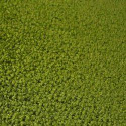 G 772 grün
